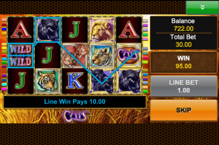 Cats Mobile Slot Win
