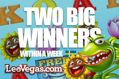 Flowers & Mega Joker Slot, Lucky for Two Big Winners at Leo Vegas