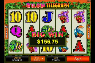 Bush Telegraph Slot Big Win