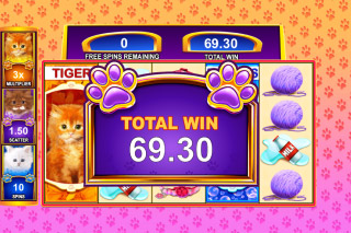 OMG Kittens Mobile Slot Bonus Win