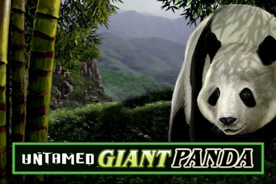 Untamed Giant Panda Mobile Slot Logo