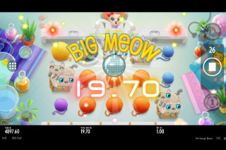 Not Enough Kittens Mobile Slot Big Win