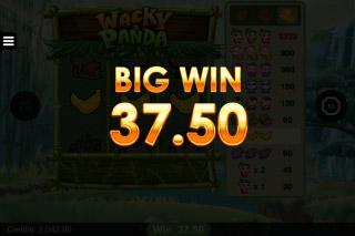 Wacky Panda Mobile Slot Big Win