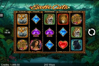 Exotic Cats Mobile Slot Game